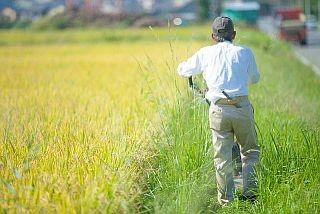 年寄り農家